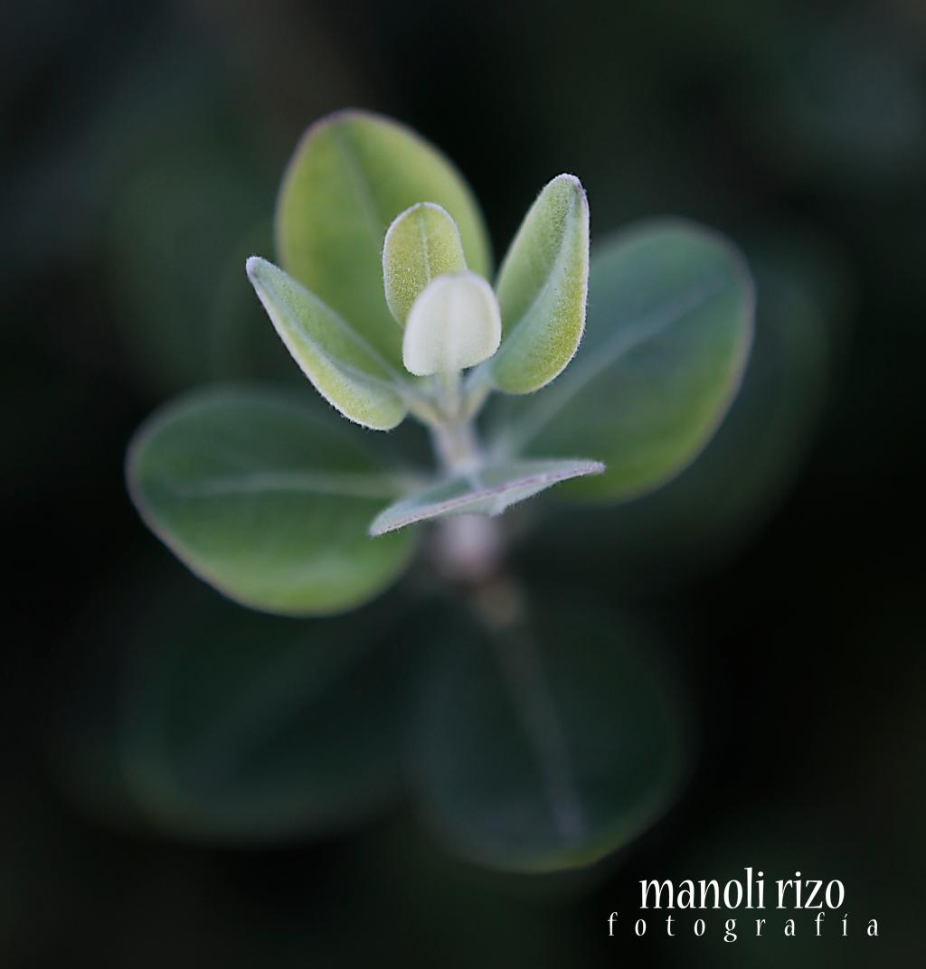 www.manolirizofotografíacom